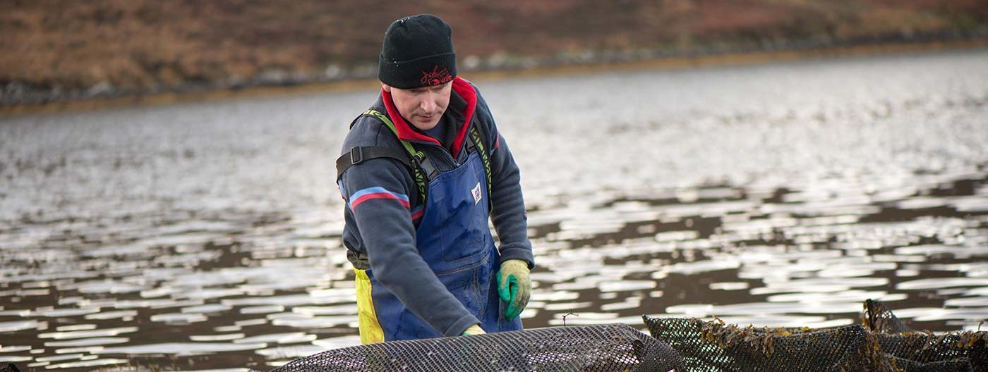 Hugh O'Malley turning bags of oysters at Achill Oysters farm