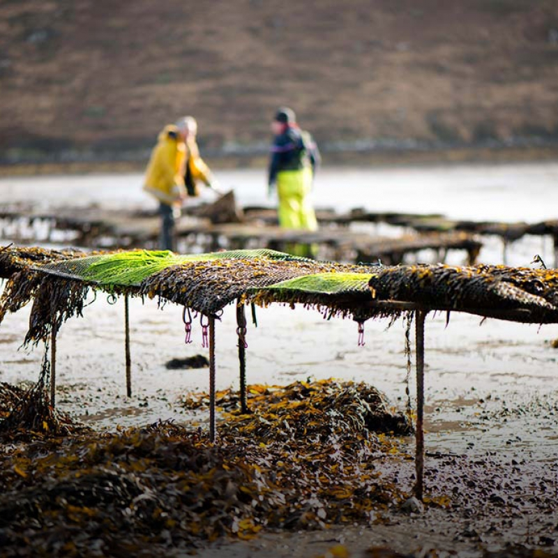 Trestles at Achill Oysters